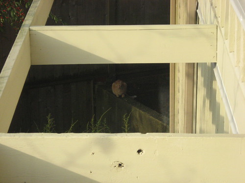Orange Bushbaby Cat Watching Our Dog