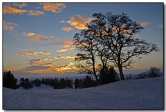 December Sunset (1) (Roger Lynn) Tags: winter sunset snow tree moscow idaho golfcourse universityofidaho palouse