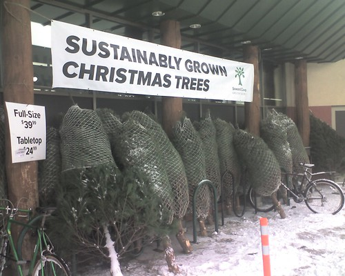 Sustainably Grown Christmas Trees