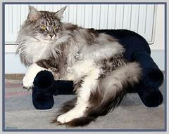Maxwell nimmt Platz! - Maxwell takes a seat!