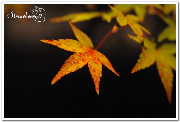 20071121京都永觀堂夜楓(13)