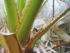 Palms (madriverrose) Tags: cassidy patricia bestnaturetnc06