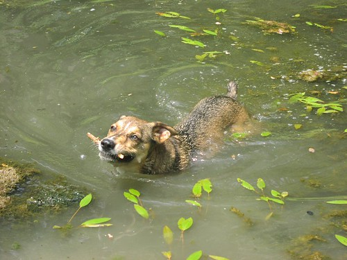 Chipper in the pond