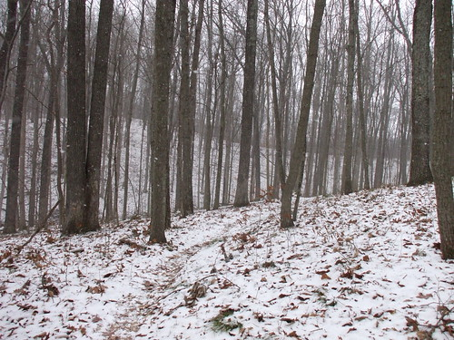 Snowing on the trail