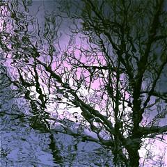 "Inner Light…!!! / Lumière intérieure…!!! (Denis Collette...!!!) Tags: light canada reflection tree bravo quebec lumière rivière reflet arbre sauvage themoulinrouge firstquality ""deniscollette"" «wildriver» world100f «innerlight» «lumièreintérieure» «iching» «yiking» «lifeinthegravitywell» «michaelstearns» «keyposition» «lightprinciple» «powerfulinfluence» «hexagramxi» «principelumineux» «hexagrammexi» whatacapturemasteroflight obq"