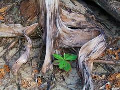 Ke'e Beach (Chuck 55) Tags: park beach hawaii state kauai coastline napali kee haena keebeach kauaihawaii beachkee
