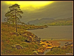 Loch Maree - Scotland (NPP-publik_oberberg) Tags: sea sun mountain tree art nature water yellow stone golden scotland sand photographer creative excellent awards loch maree lightroom naturesfinest worldbest platinumphoto superbmasterpiece onlythebestare betterthangood goldstaraward avision lochmarieinscotland