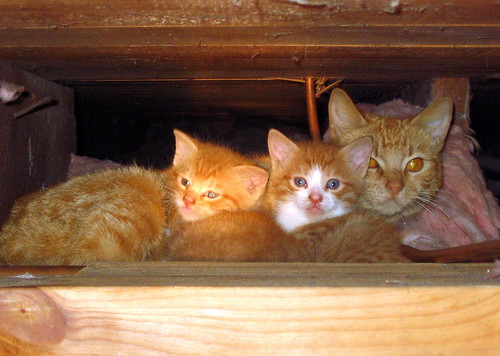 Ceiling Family