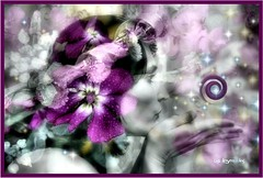 Spiral Galaxy... (~lala~(Lisa)) Tags: flowers selfportrait me self myself stars spiral flora purple lavender twinkle galaxy ih merged i spiralgalaxy avision ~lala~