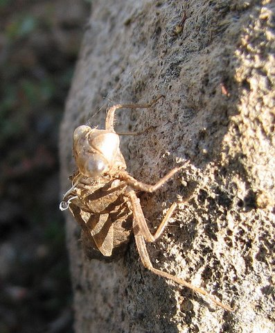 insect on a rock