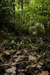 23 Wilderness