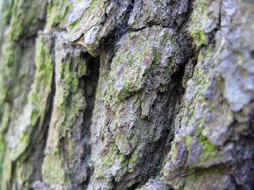 bark (spot the web)