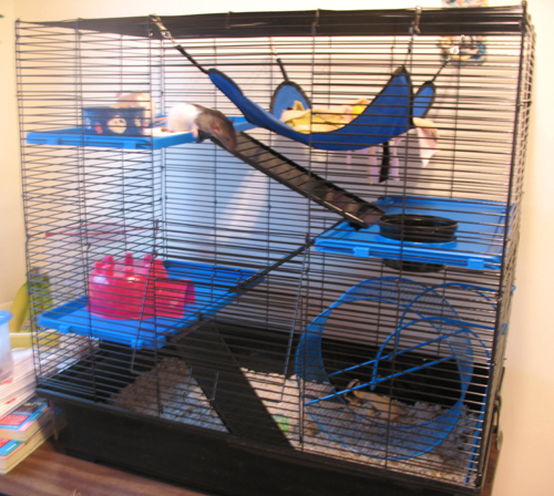 New cage!
