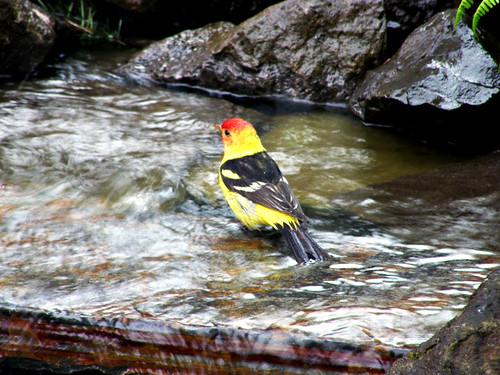 Day 131/365: Pretty Bird