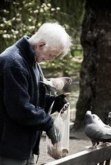 Pigeon Feeder (Clear Vista) Tags: portrait bird pigeon documentary surrey guildford