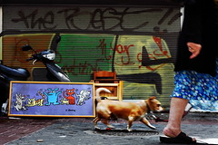 Leaving the party (Gilad Benari) Tags: street party urban dog cats pets color art dogs colors animals cat print poster israel telaviv funny different walk streetphotography  havingfun funnypicture dogsandcats adlai funnypictures florentin    keithharring  giladbenari  homur leavingtheparty  dogsparty humorousphotography homurous  dogsandcatsparty      flickrunitedaward