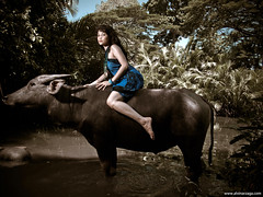 Water Buffalo Shoot (alvinj88) Tags: fashion waterbuffalo alvinj88 olympuse520 alvinarzaga waterbuffaloshoot