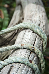 Tied (fee easton) Tags: wood blue rusty rope nails tied