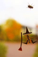 Bee-witched (boopsie.daisy) Tags: autumn silly fall halloween window strange hat wonderful bug insect buzz fun weird fly costume wings october funny wasp boots bokeh witch stripes dressup insects bugs bee odd pane decorate wacky quirky broomstick kooky blueribbonwinner supershot outstandingshots 25faves abigfave anawesomeshot isawyoufirst superbmasterpiece wowiekazowie diamondclassphotographer flickrdiamond theperfectphotographer happinessconservancy