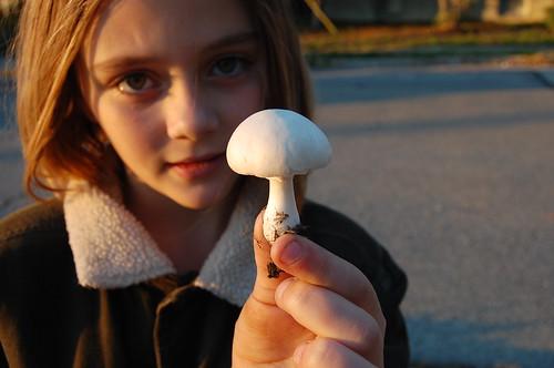 White mushrooms with honest eyes