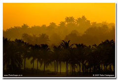 Sunrise in Polachara (Rahul Sadagopan) Tags: india tree nature sunrise nikon coconut indian d70s kerala silhoutte trivandrum southindia sigma70300apo rahulsadagopan dsc6039 polachara