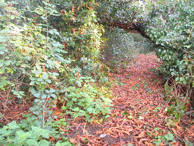 Padmaloka woodland walk