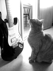 Electric guitar (Nin) Tags: cat guitar katt electricguitar gitarr mywinners elgitarr