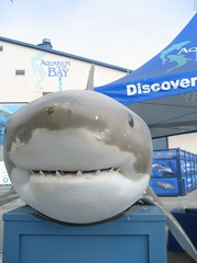 Big Shark.  Rawr.