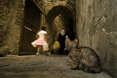 Meow, meow.... (Gilad Benari) Tags: street city people cat israel kitten alone different poor stray lonely hungry   akko gilad     benari