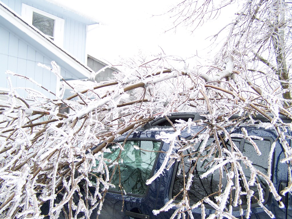 Tree on car.