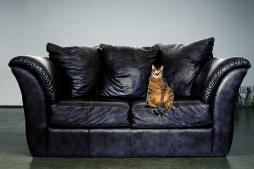Catface couch final