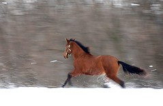 Doñada running in snow