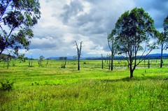 Queensland = green land,  Somerset Dam, Australia (henriette_von_ratzeberg) Tags: tree green grass rural landscape countryside dam country australia queensland grassland somersetdam golddragon impressedbeauty ultimateshot brillianteyejewel dragongold