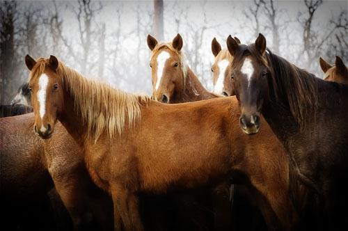 gathering mares 333