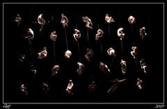 Bichitos... (z-nub) Tags: madrid city light people color luz digital zoe gente pentax bodylanguage ciudad m espectculo bichitos palaciodelosdeportes coreografa gentedelacalle znub pentaxk100d zoelv vscerasyotrasmetforas enelcentrodemadrid shanghailondon zoelpez sinacento