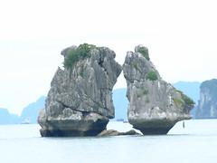 Vietnam -- Halong Bay  -- Cock and hen are kissing ... (Male & Female ) (Tony gogogo) Tags: travel sea landscape photo asia southeastasia vietnam photograph hanoi halongbay