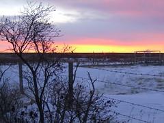 Groundhog Day Sunrise (altamons) Tags: winter canada sunrise fun amusement interestingness interesting scout canadian explore alberta attraction groundhogday balzac scouted explored altamons balzacbilly