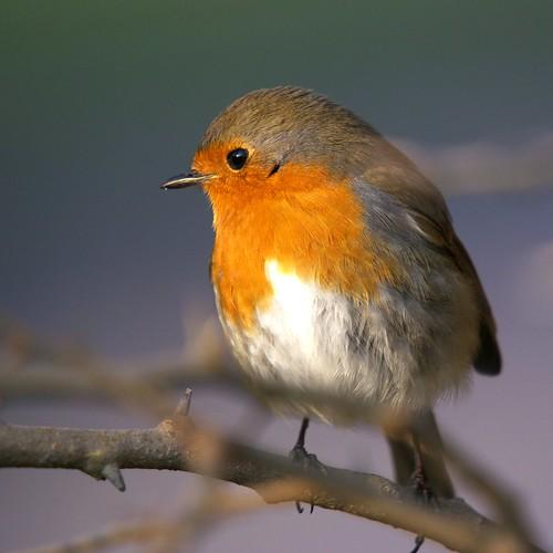 Qui est Robin des bois ?