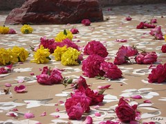 Rajiv Gandhi Park in India (Shaima82_4) Tags: park pink india flower grave rocks ship floor gandhi nippon 20 maru yallow rajiv swy swy20
