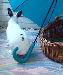 Bunny photo shoot! Happy Easter! (Justin Snow) Tags: pet cute rabbit bunny animal easter rainbow basket conejo lapin hodge bunnyrabbit yoshimi conebunny