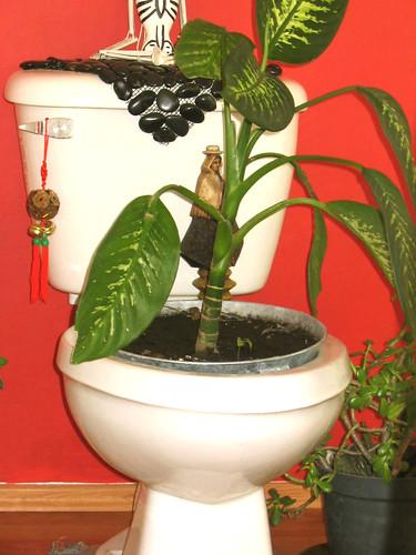 toilet plant