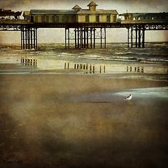 pier redux (moggierocket) Tags: uk sea reflection beach square pier seaside solitude gull textures nostalgic desolate blackpool fauxvintage 500x500 justimagine 240x240 winner500 2bdasest poseidonsdance