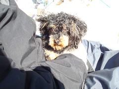 Doggie (Hduff) Tags: icefishing cattailsmd commercialouting