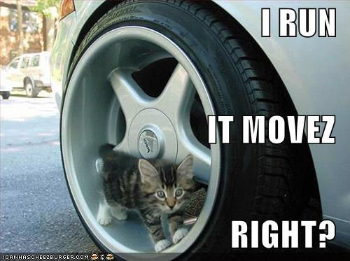 funny-pictures-kitten-in-car-wheel