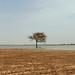 """<a href=""""http://www.flickr.com/photos/62204521@N00/2448886756/"""" mce_href=""""http://www.flickr.com/photos/62204521@N00/2448886756/"""" target=""""_blank"""">Ahmed Rabea</a> via Flickr"""