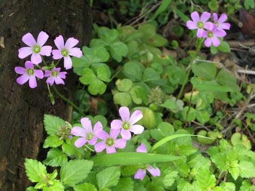 我是春天裡的漂亮小野花
