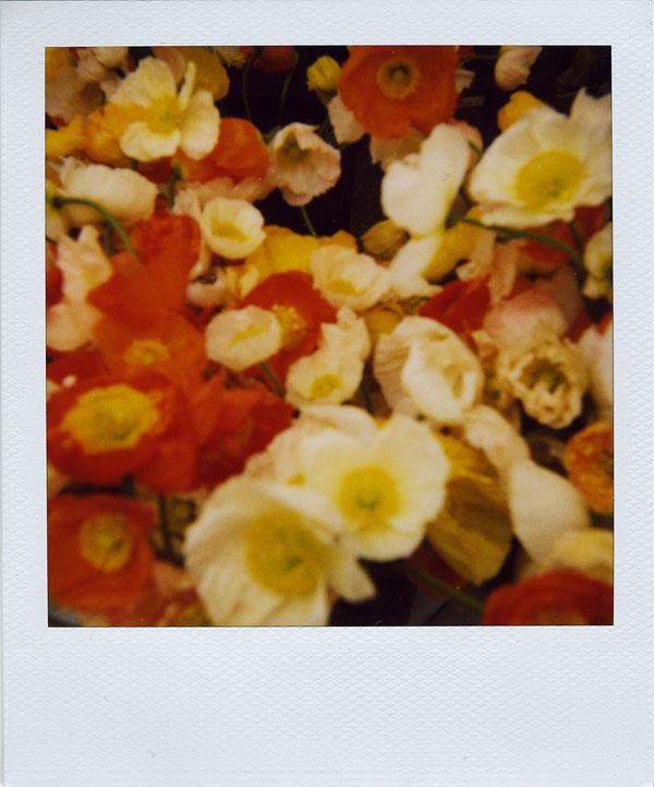 may18: poppies