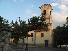 Szentendre - Church and Tree