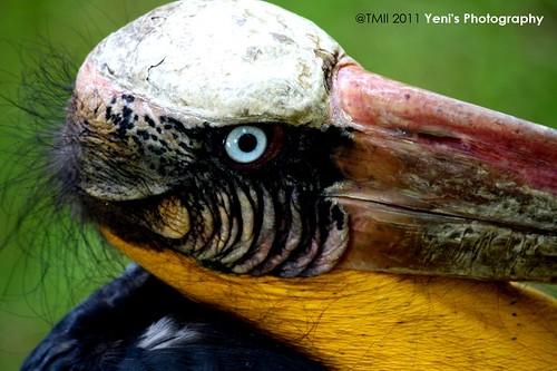Professor Bird by yeni herdiyeni