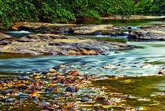 River Scene-Cross Processed (chesshoyle) Tags: autumn mist fall water leaves river stream flowing nikonstunninggallery